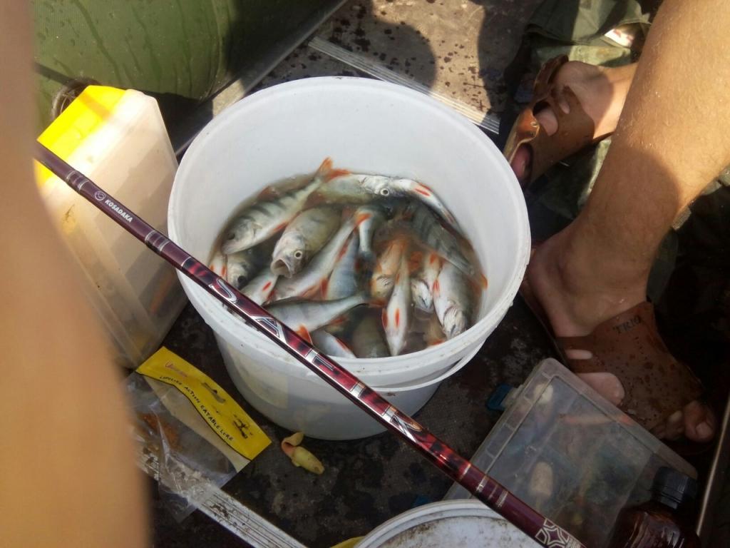 соревнования по рыбной ловле 2017 воронеж